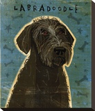 Black Labradoodle Stretched Canvas Print by John Golden