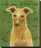 Italian Greyhound (Fawn) Stretched Canvas Print by John W. Golden