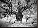 Portrait of a Tree, Study 2 Stretched Canvas Print by Stawiarz Marcin
