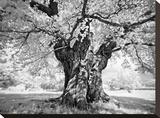 Portrait of a Tree, Study 18 Stretched Canvas Print by Marcin Stawiarz
