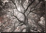 Ethereal Tree Stretched Canvas Print by Hudson Michael