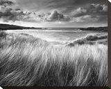 Sea Grass Stretched Canvas Print by Stephen Gassman