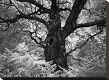 Portrait of a Tree, Study 12 Stretched Canvas Print by Marcin Stawiarz