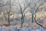 Forest Frost Photographic Print by David Baker