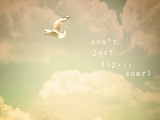 Don't Just Fly...Soar! Photographic Print by Susannah Tucker