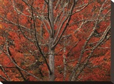 Lithia Park in Fall Stretched Canvas Print by David Winston