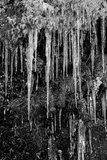 Moss Icicles Photographic Print by Craig Howarth