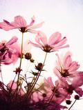 Her Secret Garden Fotografie-Druck von Susannah Tucker