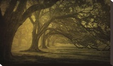 Oak Alley Morning Shadows Stretched Canvas Print by Guion William