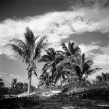 Santa Maria Beach, Havana, Cuba Photographic Print by Paul Cooklin