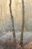 Forest Mist Photographic Print by David Baker