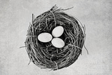 Nest Fotografisk trykk av Susannah Tucker