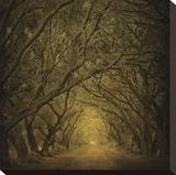 Evergreen Oak Alley (vertical view) Reproduction transférée sur toile par William Guion