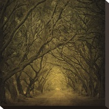 Evergreen Oak Alley (vertical view) Stretched Canvas Print by William Guion