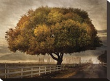 Autumnal Landscape Stretched Canvas Print by David Winston