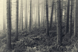 Forest Calm Photographic Print by David Baker