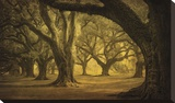 Oak Alley West Row Stretched Canvas Print by Guion William