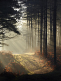 Forest Light Photographic Print by David Baker
