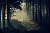 Forest Beam Photographic Print by David Baker