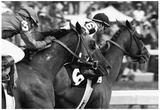 Affirmed Horse Racing Archival Photo Poster Posters
