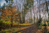 Autumn Days Photographic Print by Mark Gemmell