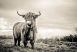 The Highlands Fotografisk tryk af Mark Gemmell