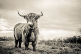 The Highlands Photographic Print by Mark Gemmell