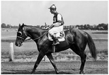 Assault Horse Racing Archival Photo Poster Prints