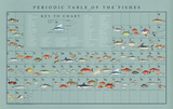 Periodic Table of the Fishes Educational Food Poster Prints by Naomi Weissman