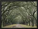 Moss-Covered Plantation Trees, Charleston, South Carolina, USA Framed Photographic Print by Adam Jones