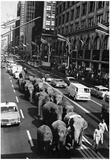 Elephants Circus Parade Archival Photo Poster Photo