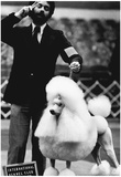 Poodle Dog Show 1977 Archival Photo Poster Prints