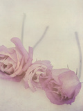 Lisianthus II Photographic Print by Mia Friedrich