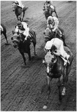 Bridlespur at Suffolk Downs Horse Racing 1978 Archival Photo Poster Posters