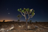 Stars over Joshua Trees in the Desert Photographic Print by Ben Horton