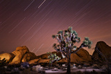Star Trails over Joshua Trees and Granite Formations in the Desert Photographic Print by Ben Horton