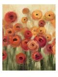 Ranunculi Field II Premium Giclee Print by Silvia Vassileva