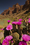 Prickly Pear Cacti and Rafters on the Colorado River Photographic Print by Ralph Lee Hopkins
