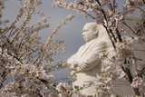 Cherry Blossoms Frame the Marble Statue of Martin Luther King Photographic Print by Stephen St. John