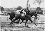 Vintage Horse Racing 1966 Archival Photo Poster Plakaty
