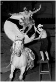 Circus Horse Stunt Archival Photo Poster Posters