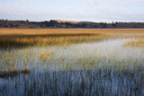 Reeds in Lake Titicaca at Sunrise Photographic Print by Jonathan Irish