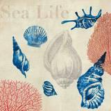Sea Life Study Prints by Aimee Wilson
