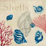 Shell Study Posters by Aimee Wilson