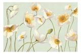 Shirley Novak - White and Bright Poppies - Birinci Sınıf Giclee Baskı