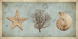 Sea Treasures II Posters by Deborah Devellier