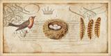 Nesting II Posters by Deborah Devellier