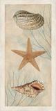 Ocean Companions I Prints by Deborah Devellier