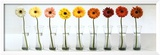 Gerbera Spectrum Prints