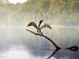 A Neo-Tropical Cormorant (Phalacrocorax Brasilianus) Perches On Photographic Print by Sergio Ballivian